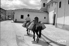 Un paseo por el Cali Viejo | Gente Cali Colombia, Camel, Animals, Old Photography, Walks, Antique Photos, Black And White, Scenery, Animales