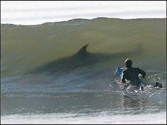 Shark + man