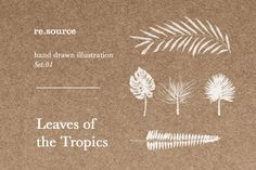 Graphic Design - Graphic Design Ideas  - Tropical Leaves Illustrations by re.source on Creative Market   Graphic Design Ideas :     – Picture :     – Description  Tropical Leaves Illustrations by re.source on Creative Market  -Read More –