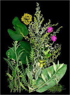 Selections From Natural Companions By Ken Druse, Botanical... - Scanner Photography By Ellen Hoverkamp