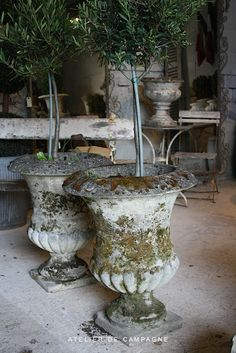 Rosemary topiary trees in antique urns - nice!