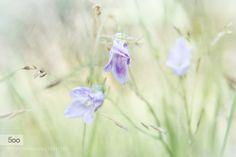 Subtle Beauty by AndersStangl - Pinned by Mak Khalaf
