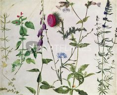 """Eight Studies of Wild Flowers "" Painting art prints and posters by Albrecht Dürer - ARTFLAKES.COM"