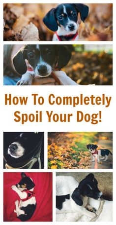 How To Completely Spoil Your Dog - Ridiculously cool gift ideas for your favorite doggy friend!
