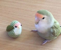 Two Cute Little Birbs