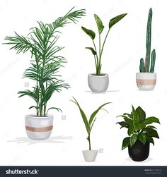 Room plants isolated, tree, flowerpot, decoration, fern, agave, apartment, natural, isometric, green, white, pot, flower, leaf, vector, element, flat, modern, illustration, object, window, wall, decorative, room, desk, garden, design, interior, plant, watercolor, home, house, wooden, beautiful, background, indoor, nature