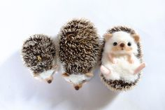 仰向けハリネズミさん Needle Felted Animals, Felt Animals, Needle Felting Tutorials, Pom Pom Crafts, Cute Hedgehog, Cute Stuffed Animals, Cute Little Animals, Felt Hearts, Felt Diy