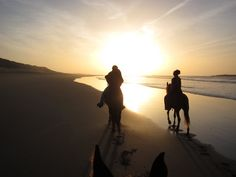 Ride a horse on the beach Trail Riding, Horse Riding, Horse Galloping, Year Of The Horse, Love At First Sight, Horseback Riding, Beautiful Horses, Morocco, Equestrian