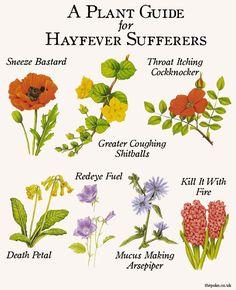 hayfever_flowers_guide