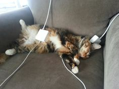20 Things only cat owners can understand better