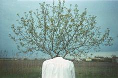 tree head 2