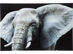 Obraz Face Elefant — Obrazy Kare Design — sfmeble.pl