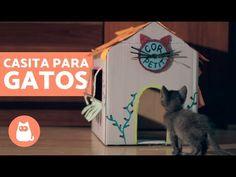 CASA para GATOS casera CASITA de cartón para GATOS - YouTube