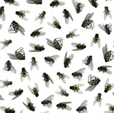 "I need some dead fly wallpaper, via ""flys"" by Steve Poxson!"