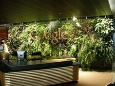 Google green wall