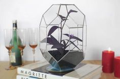 Geometric Glass Terrarium Gifts for Gardeners by MuditaCrafts Glass Terrarium, Terrarium Diy, Terrariums, Clear Glass, Glass Art, Orchid Planters, Stained Glass Studio, Wedding Decorations, Christmas Decorations