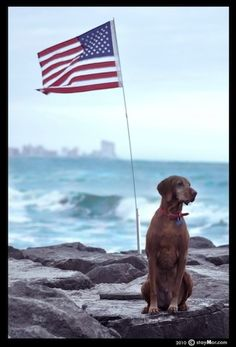 Tips for keeping pets safe on the 4th of July!
