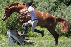 Auction item 'Tik Maynard - Lesson (2016/2017) & DVD' hosted online at 32auctions. Natural Horsemanship, Auction Items, Horses, Animals, Animais, Animales, Animaux, Animal, Horse