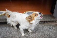 Cómo Lograr Que Tu Perro Deje De Ladrar Por Todo Mis Animales En 2020 Perros Perros Ladrando Perros Mascotas