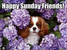 24aug14 - Happy Sunday