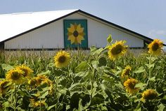 A field of sunflowers blooms in front of a sunflower-themed barn quilt near the intersection of highways F and 67 near Williams Bay.