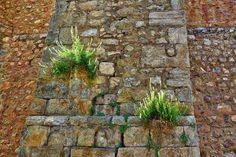 Une astuce naturelle imparable contre les mauvaises herbes