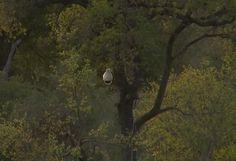 Djuma camera at waterhole #SafariLive 9-23-15
