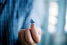 Fly away hand, anim, blue azul, butterflies, color, blue inspir, blue butterfli, blue thing, blues