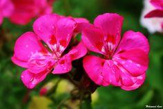 Flower 473  by Mohammad Azam