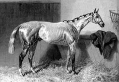Chanticleer Race Horses, Horse Racing, Grey Horses, Thoroughbred, History, Animals, Historia, Animales, Animaux