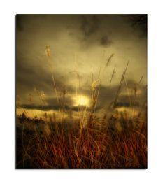 Sunset Grass Zen Photograph Otherworldly Meadow Dusk by gothicrow, $17.00