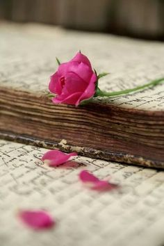 There is something so beautiful and vintage-y about old books and pink roses