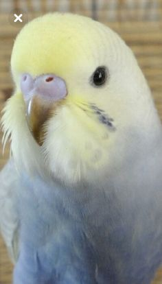 What a pretty parakeet. We want a pet bird so bad!