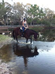Get to know Equestrian Inc., a home and retraining center for retired racehorses in Tampa, FL