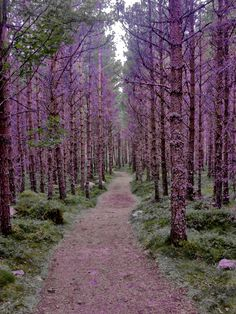 Purple forest, Inverney | Scotland (by Jordan Moffat Photography)
