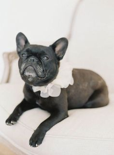 Your pampered pooch might steal the show in this ruffled silk-organza collar, which comes in white, tan, or pink. A portion of proceeds from each purchase go to a NYC-based animal shelter, so you'll be dressing up your dog for a good cause! | Photo by Jen Huang