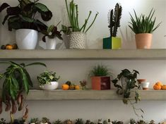 Grace and Thorn Hackney Road succulents, Photo by Christine Chang Hanway | Gardenista