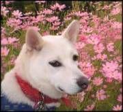 Dog Cancer Diet