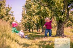 Perfect sunny afternoon pottering around Kent orchards. Canterbury, Kent.
