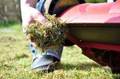 Moos im Rasen kann zur Gefahr werden, wenn es andere Pflanzen überdeckt. Mit unseren Tipps geht's dem Moos an den Kragen.