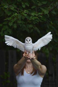 Hey, I found this really awesome Etsy listing at https://www.etsy.com/ru/listing/451865326/needle-felted-screech-owl-felt-owls