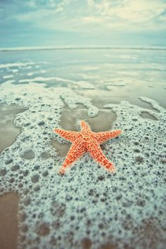 starfish by night-fate on deviantART