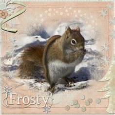 Frosty Red Squirrel