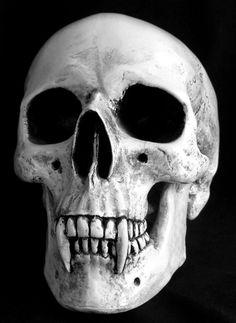 vampire skull                                                                                                                                                                                 More