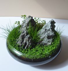 Unique Lawn-Edging Ideas to Totally Transform Your Yard - The Trending House Garden Terrarium, Bonsai Garden, Succulents Garden, Garden Plants, Indoor Plants, Moss Terrarium, Terrarium Wedding, Fruit Garden, Dish Garden