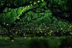yume-cyan_forest.jpg (640×426)