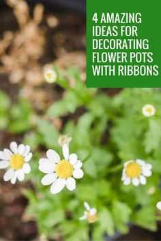 4 Amazing Ideas for Decorating Flower Pots With Ribbon – Drency
