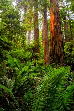 ~~Prairie Creek Redwoods State Park, Humboldt County, California by Rod Heywood~~