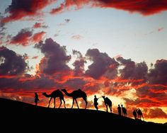 camel train in the thar desert, rajasthan, india