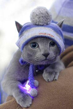 love<3 #cat--he's got his own hat.so cute